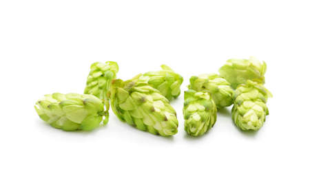 Green flower hop isolated on a white background.