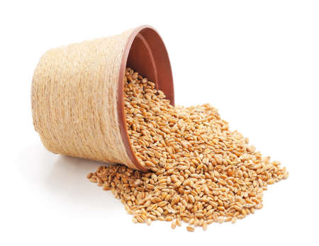 Whole grain of wheat with a jug isolated on a white background.