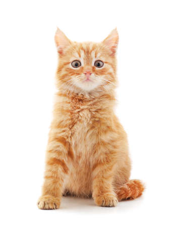 Little red kitten isolated on a white background. Banco de Imagens
