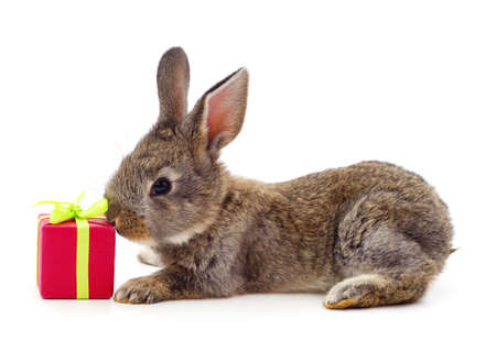 One brown rabbit with gifts isolated on a white background.