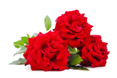 Beautiful red flowers isolated on a white background. 스톡 콘텐츠