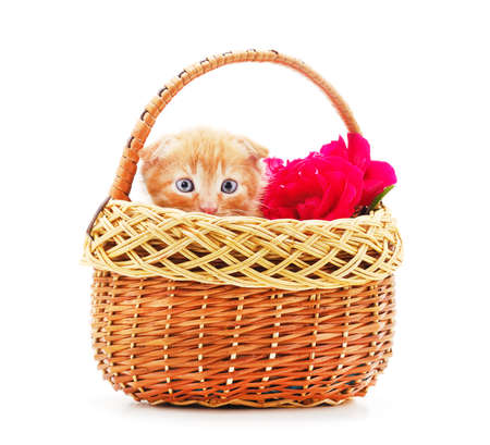Little red kitten in the basket isolated on a white background.