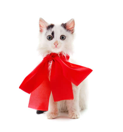 Little gray kitten with beautiful ribbon isolated on a white background. Foto de archivo