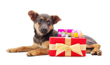 One little dog with a gifts isolated on a white background.