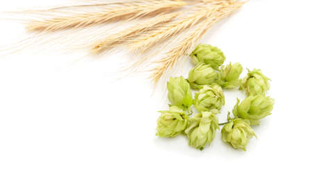 Hops and barley isolated on a white background.