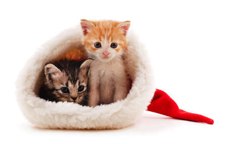 Gray kittens in Christmas hat isolated on a white background.