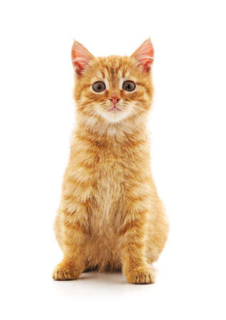 One red cat isolated on a white background. Stock fotó