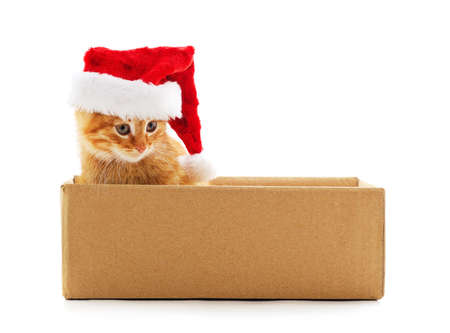 Little cat in the box in a Christmas hat isolated on a white background. Stok Fotoğraf