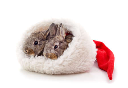 Two little rabbits in a Christmas hat isolated on a white background.