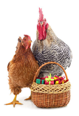 Chicken and rooster stand near the basket with gifts isolated on a white background.