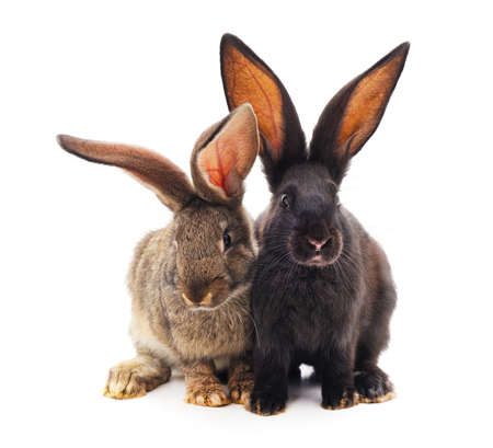 Two little rabbits isolated on a white background. Banque d'images