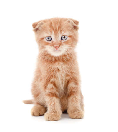 Little red kitten isolated on a white background. Banque d'images