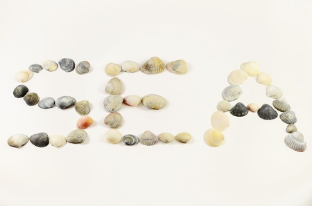 Word sea of sea shells photo