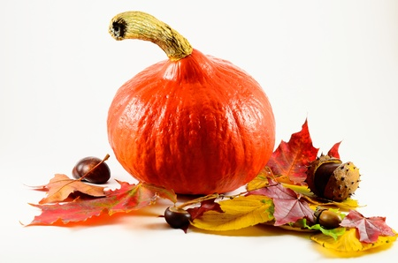 Arrangement of pumpkins, leaves and chestnuts isolated Stock Photo