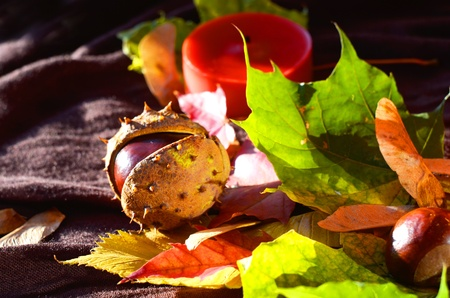 Still life of chestnut and yellow leaves Stock Photo