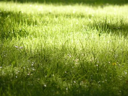 Solar lawn with green grass in garden