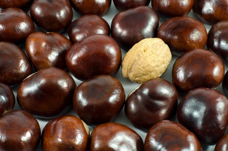 Background of brown chestnuts and a single walnut