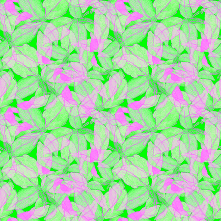 Basil Leafs Seamless Pattern. Vegan Repeatably Hand Drawn Background. Fresh Design for Vegeterian Menu, Fabric, Textile, Wallpaper, Wrapping. Watercolor Green Basil Leafs on White Background