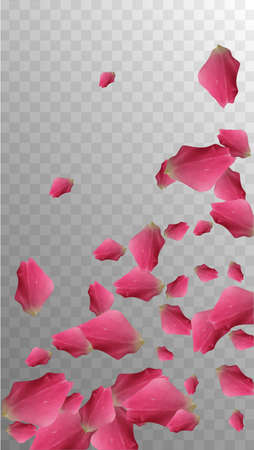 Delicate Pattern. Light Blossom. Romance Vector Petal. Rose Template. Natural Illustration. Beautiful Vintage Bloom. Soft Delicate Pattern. Isolated Invitation. Delicate Leaf. 免版税图像 - 156771940