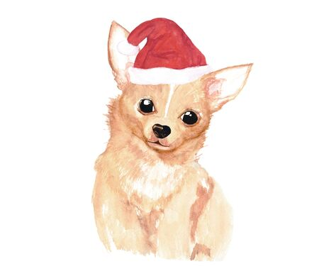 Longhair red chihuahua in Santas cap. Fluffy brown little dog in a Christmas hat. Christmas watercolor illustration.