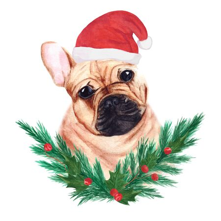Red French Bulldog in Christmas hat with New Years wreath of fir-tree and leaves and berries of holly. Cute little brown dog. Watercolor illustration. Archivio Fotografico