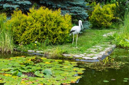 herodias: A great blue heron in his natural habitat.