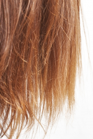Closeup di castagno naturale dei capelli dividere termina isolato su bianco con fuoco  Archivio Fotografico
