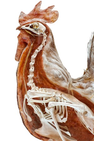 Section of stuffed chicken with skeleton inside isolated on white Stock Photo