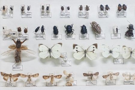 Collection of pinned bugs and butterflies with names in Latin