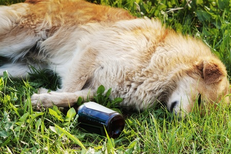 mongrel dog sleeping in green grass with paw on bottle of alcohol photo