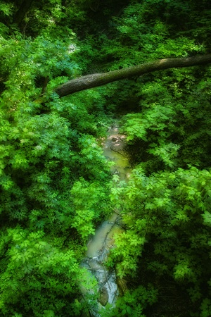 Small creek in the middle of luscious green leaves in the forest photo