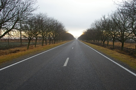 New highway in the countryside with naked trees and overcast sky photo