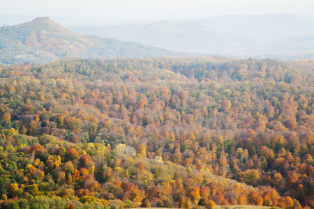 hills covered with yellow forest in the fall
