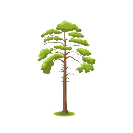 nature vector: Stylized tree on white background. Nature vector illustration.