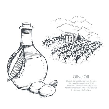 Hand-drawn olive oil and olive field. Vector sketch illustration.