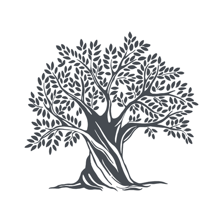 Hand drawn olive tree. Vector sketch illustration Vettoriali
