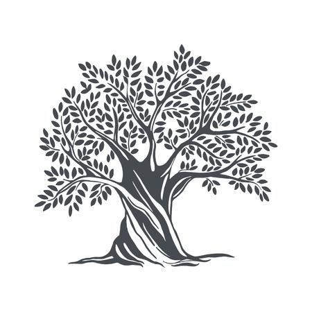 Ručně tažený olivový strom. Vektorové ilustrace náčrtu