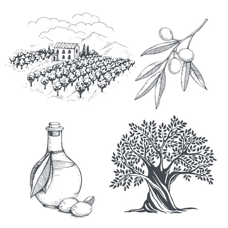 Hand-drawn olive collection. Tree, branch, oil bottle and olive field. Vector sketch illustration
