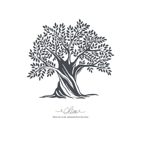 Hand drawn olive tree. Vector sketch illustration Illustration