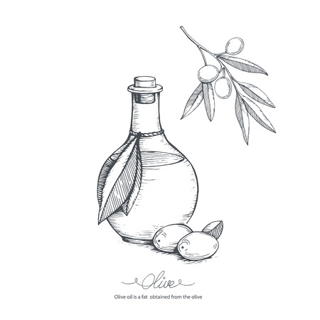 italy culture: Hand-drawn olive oil and olive branch. Vector sketch illustration.