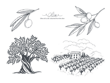 Hand-drawn olive collection. Tree, branch and olive field. Vector sketch illustration