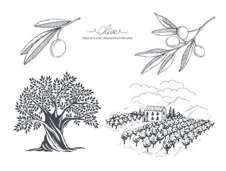 Collezione di olive disegnate a mano Albero, ramo e campo di ulivo. Illustrazione di schizzo vettoriale