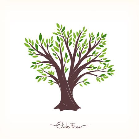 Oak beautiful tree