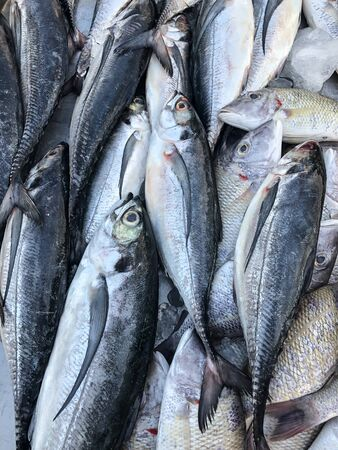 Photo of fresh fish on the counter supermarket Stock Photo