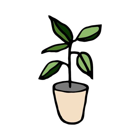 Isolated on a white background seedlings drawing plant in a pot, hand-drawing, doodle, vector
