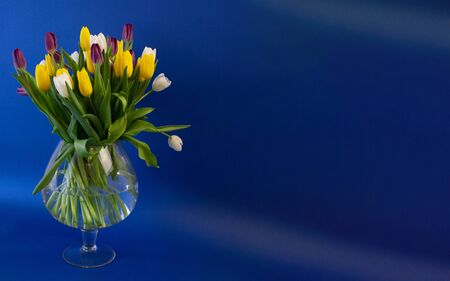 明信片模板,复制空间-vaza花卉郁金香在蓝色的背景