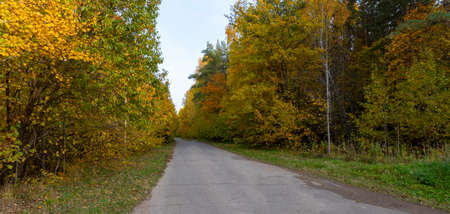 Autumn landscape, forest in autumn, yellow leaves. Beautiful background or screen saver on the phone and computer
