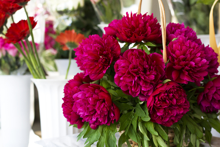 Three dark pink peonies flowers in a vase indoors. Spring flowers. Beautiful peonies in a bouquet. Banco de Imagens