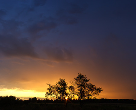 Summer landscape of sunset with stormy sky and silhouettes of trees photo