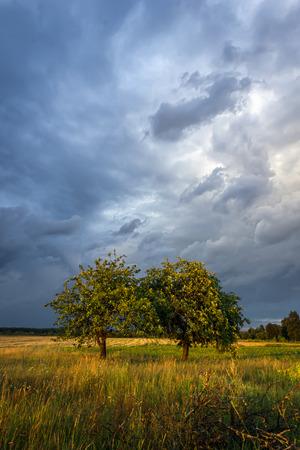 alberi da frutto: Campagna scena alla sera con nubi tempestose e alberi da frutta illuminati da raggi di sole Archivio Fotografico